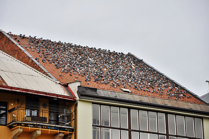 A2B Pest Control are able to install spikes to deter birds from roofs in Richmond.