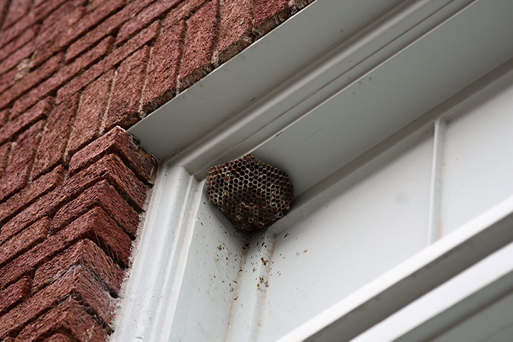 We provide a wasp nest removal service for domestic and commercial properties in Richmond.